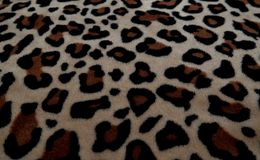 H?rlig bakgrund med p?ls med leopardf?rgl?ggning royaltyfri bild