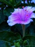 H?rlig blomma royaltyfria foton