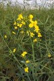 h?rlig blommayellow Litet ting i stort gräs royaltyfri foto
