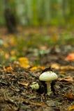 H?rlig closeup av skogchampinjoner royaltyfri fotografi