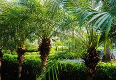 H?rlig gr?n tr?d-, v?xt-, skog- och blommabakgrund i de utomhus- tr?dg?rdarna arkivfoton
