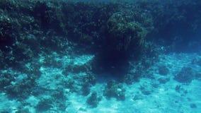 H?rlig l?ngd i fot r?knat 4k av massor av fiskar som simmar runt om korallreven p? havsbotten F?rbluffa marin- liv det djupa have lager videofilmer