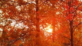 h?rlig liggande f?r h?st Solen skiner till och med sidorna av orange l?nn, bakgrund arkivbilder