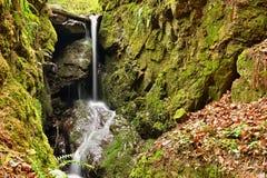 H?rlig naturbakgrund med str?m- och skogv?r i natur royaltyfri fotografi