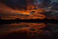 h?rlig panorama- solnedg?ng i den queensland vildmarken 200 km nord av cloncurry, queensland Australien fotografering för bildbyråer