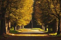 H?rlig romantisk gr?nd i en parkera med f?rgrika tr?d och solljus Naturlig bakgrund f?r h?st arkivbild