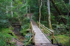H?rlig sikt av en liten tr?bro ?ver en str?m i skogen i den Gauja nationalparken i Lettland arkivfoton
