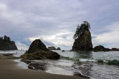 H?rlig sikt av stranden i den olympiska nationalparken, Washington, USA royaltyfri fotografi