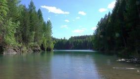 H?rlig skog som reflekterar p? lugna sj?kust Materiell?ngd i fot r?knat Lugna ren sjö i skogen arkivfilmer