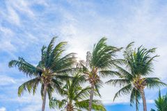 H?rlig tropisk natur med kokosn?tpalmtr?det p? bl? himmel och det vita molnet arkivfoton