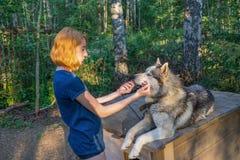 H?rlig ung dam med hennes f?rtjusande gulliga hund av den siberian hasky aveln i sommarskog p? solnedg?ngen Lycklig ton?rs- flick arkivfoton