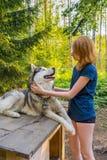 H?rlig ung dam med hennes f?rtjusande gulliga hund av den siberian hasky aveln i sommarskog p? solnedg?ngen Lycklig ton?rs- flick royaltyfria bilder