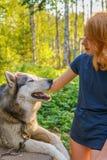 H?rlig ung dam med hennes f?rtjusande gulliga hund av den siberian hasky aveln i sommarskog p? solnedg?ngen Lycklig ton?rs- flick royaltyfri fotografi
