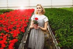 H?rlig ung le flicka, arbetare med blommor i v?xthus Begreppsarbete i v?xthuset, blommor kopiera avst?nd royaltyfri bild