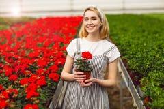 H?rlig ung le flicka, arbetare med blommor i v?xthus Begreppsarbete i v?xthuset, blommor kopiera avst?nd royaltyfri fotografi