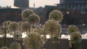 H?rliga blommor i parkera lager videofilmer