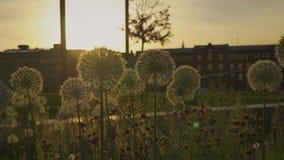 H?rliga blommor i parkera arkivfilmer