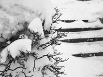 H?rliga buskar i sn?n med en stege efter ett sn?fall i vinter arkivbild