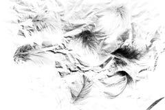 H?rliga closeuptexturer g?r sammandrag den fallande isolerade v?ggbakgrunden och modellen f?r fj?drar svartvit f?rg arkivfoto