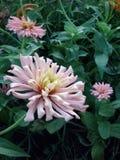 h?rliga Europa blommor kan viciifoliaen f?r springtime f?r salviaen f?r naturonobrychispratensisen royaltyfri bild