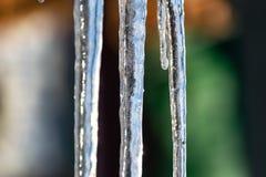 H?rliga, genomskinliga och rena istappar p? solnedg?ngen av vintersolen Hala, kalla och sl?ta modeller av naturen royaltyfri bild