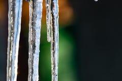 H?rliga, genomskinliga och rena istappar p? solnedg?ngen av vintersolen Hala, kalla och sl?ta modeller av naturen arkivbild