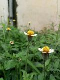 H?rliga gula blommor i regnig s?song royaltyfri bild