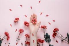 H?rliga kvinnliga h?nder f?r n?rbild med purpureblommor p? rosa bakgrund Sk?nhetsmedel f?r handanti-skrynkla royaltyfri bild