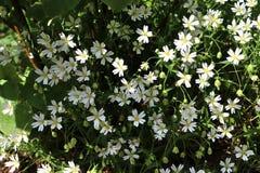 H?rliga och f?rgrika gula vita och purpurf?rgade v?rblommor i solljuset fotografering för bildbyråer