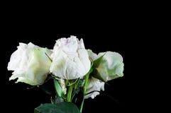 H?rliga v?xter med doftande blommor som inomhus arkivfoto