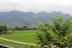 H?rligt landskap med den trevliga v?gen och gr?na f?lt p? b?da sidor royaltyfri fotografi