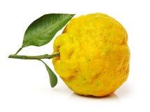 H?ssliche Tangerine stockfotos