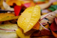 h?st fallna leaves arkivfoton