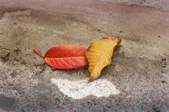H?st fallna leaves arkivfoto