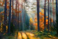 H?st Landskap f?r h?stskogskog Nedg?ngnatur royaltyfri foto