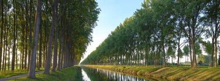 H?staftonljus p? avenyn av boktr?dtr?d som fodrar de tvilling- kanalerna av Leopoldkanaal och Schipdonkkanaal - n?ra Oostkerke arkivfoto