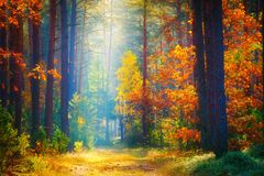 H?sten landskap Nedg?ngbakgrund Skogsolljus arkivbild