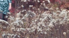 H?stgl?nta av blommor stock video