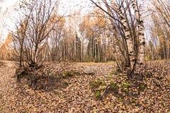 h?stlig park h?sten l?ter vara trees fall fotografering för bildbyråer