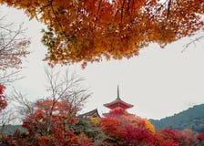 H?sttr?dg?rd i Kyoto, Japan arkivbild