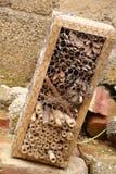 Hôtel d'insecte Image stock