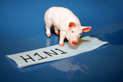 H1N1 or swine flu virus. A miniature toy pig and bandage with the words H1N1 represent the swine flu that is sweeping the nation.  Shiny blue background with Royalty Free Stock Photography