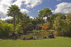 H50 Tropical garden paradise. Carefully sculptured tropical garden Stock Photos