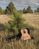 H96 Flamenco in a field. Displaying a new guitar Stock Images