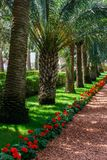 HAÏFA, ISRAËL 25 MARS 2018 : Les terrasses de la foi de Bahai gren le parc au printemps photo libre de droits