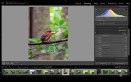 Hałas redukcji oprogramowanie, Adobe Lightroom obrazy royalty free
