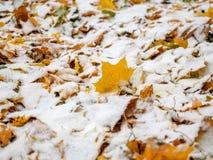 Ha cubierto las hojas de otoño caidas-abajo amarillas con la primera nieve en el parque Imagenes de archivo