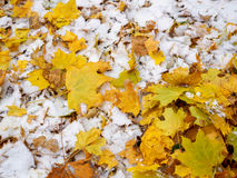 Ha cubierto las hojas de otoño caidas-abajo amarillas con la primera nieve en el parque Fotografía de archivo