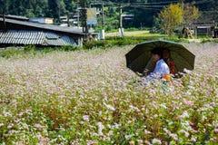 Ha Giang, Вьетнам - 8-ое ноября 2015: Семья меньшинства Hmong вьетнамца принимая остатки на фиолетовом цветке поля увеличения пок Стоковые Фотографии RF