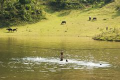 Ha Giang, Vietnam - Sep 22, 2013: Vietnamese rural scene, with children swimming on the lake and water buffaloes eating grass on b. Eyond hill Royalty Free Stock Photos